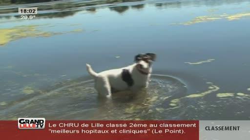 Canicule : Détente au Parc du Héron (Villeneuve d'Ascq)